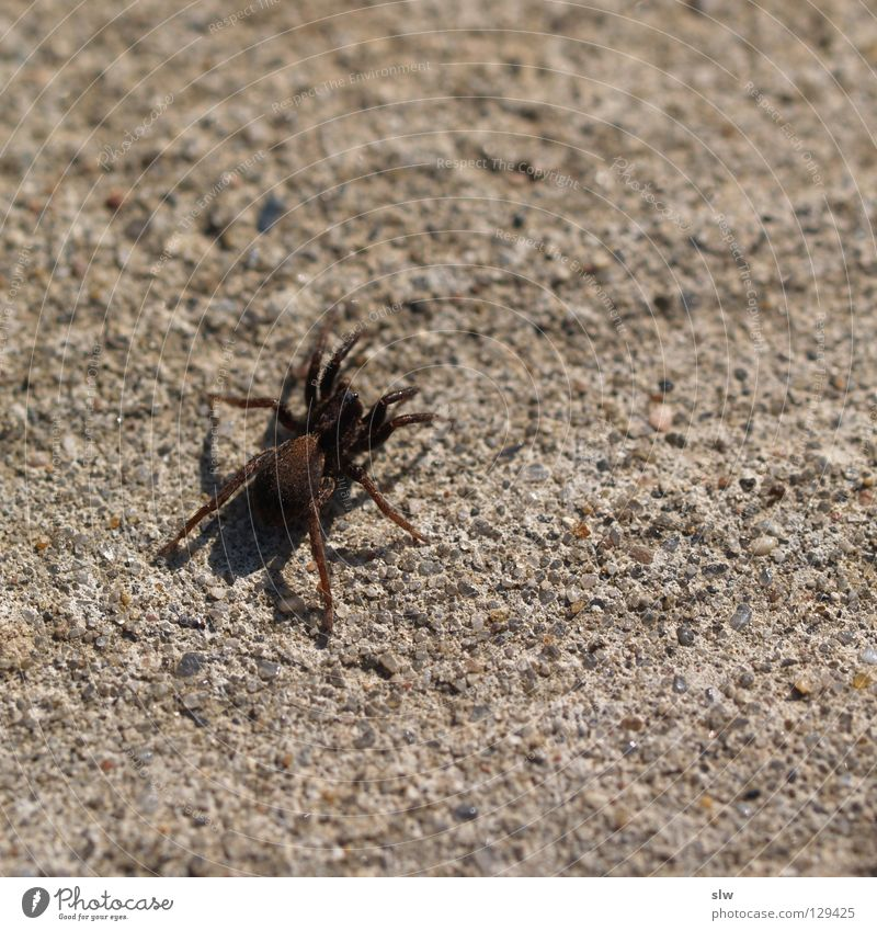 Street Grass Concrete Floor covering Net Observe Spider Crawl Spider's web