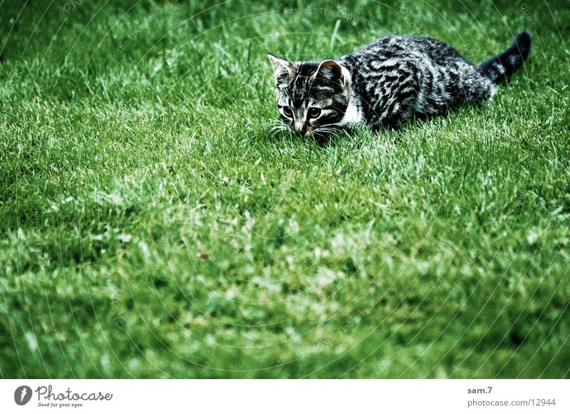 Cat Wait Cute Tepid