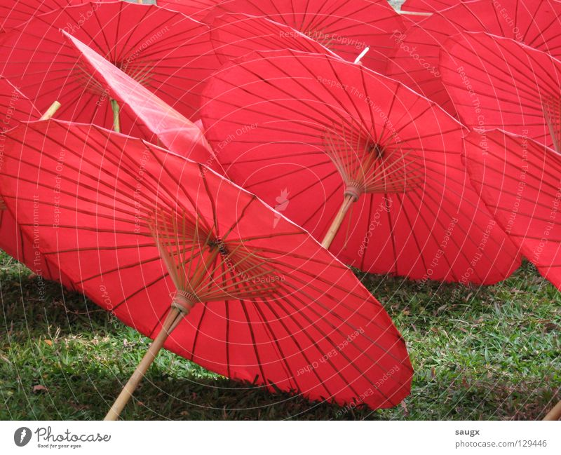red umbrellas Red Sunshade Paper Asia Thailand Chiangmai Craft (trade) Vacation & Travel Art Arts and crafts  Colour Summer