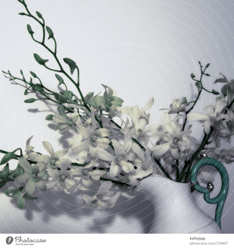 White Plant Flower Colour Blossom Gold Multiple Success Growth Decoration Climbing Living thing Stalk Turquoise Virgin forest Fragrance