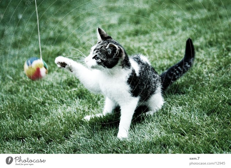 Playing Cat Sweet Ball Cute