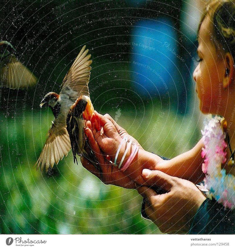 Flying Beauty.... Paris L Bird feeding sparrow pretty birds amazing Snap it