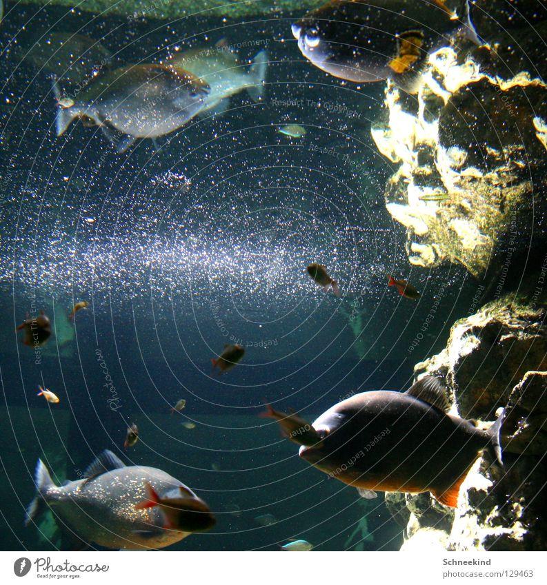 glittering world Aquarium Zoo Mirror Mirror image Glittering Joy Fish Navigation Nature Water Stone