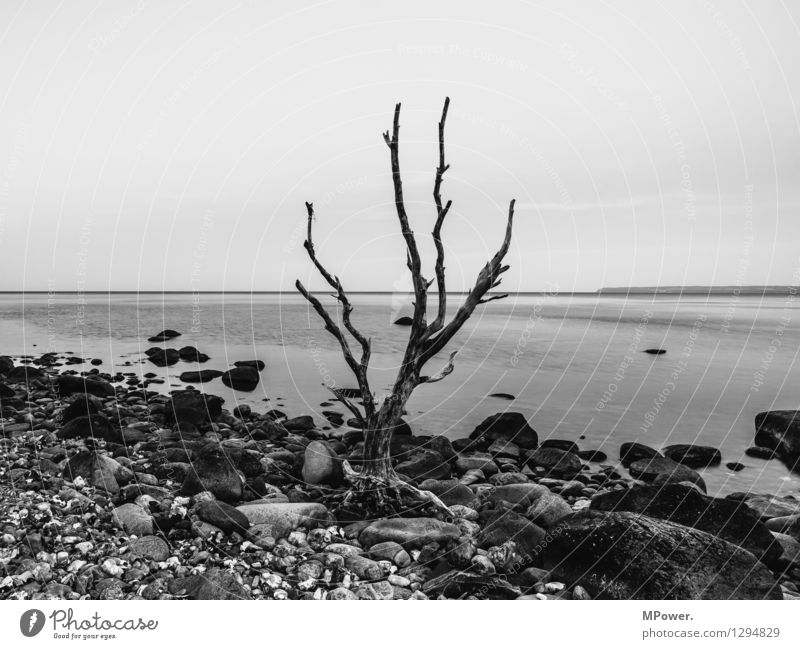 dreariness Environment Nature Landscape Elements Water Sky Tree Old Maritime Ocean Coast Gloomy Bleak Environmental pollution Death Gray Surface of water