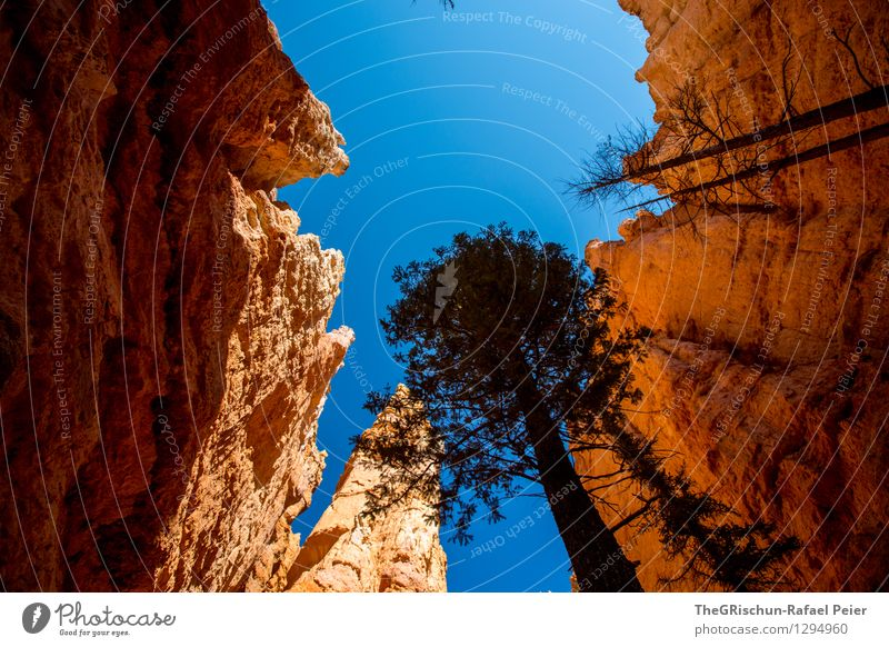 bryce Environment Nature Landscape Earth Sand Sky Cloudless sky Blue Brown Yellow Gold Orange Black White Tree Shadow Rock Rock formation Bryce Canyon USA