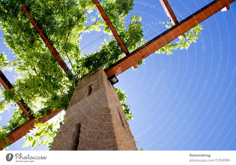 Sky Nature Plant Blue Green Summer Sun Leaf Environment Wall (building) Wall (barrier) Wood Stone Brown Bright Weather