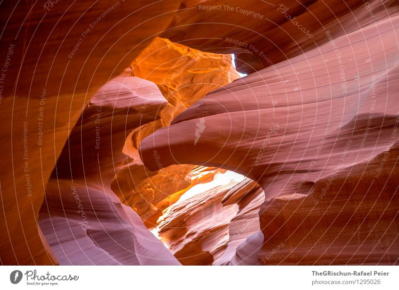 eagle Environment Nature Landscape Sand Brown Yellow Gray Orange Black Antelope Canyon USA Travel photography destination Eagle Structures and shapes Progress