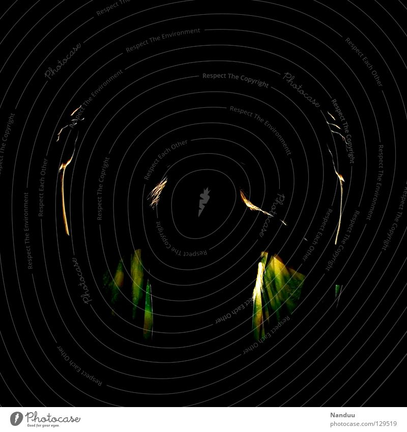 Elf dance, the second Dark Ghosts & Spectres  Widget Back-light Green Black Creepy Calm Fear Panic Dance Club Fairy Idea