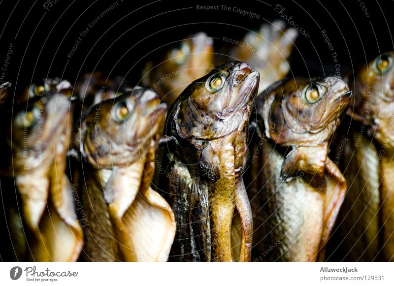 hang out with da fish choir Brown trout Kipper Impaled Hang Fishery Snack Fisheye Trout smoke oven Markets Nutrition Multiple Smoked trout Fish eyes Dead animal