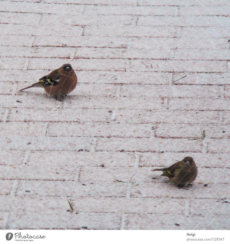 White Red Winter Black Cold Snow Garden Spring Lanes & trails Feet Brown Bird Ice Together Wait Pair of animals