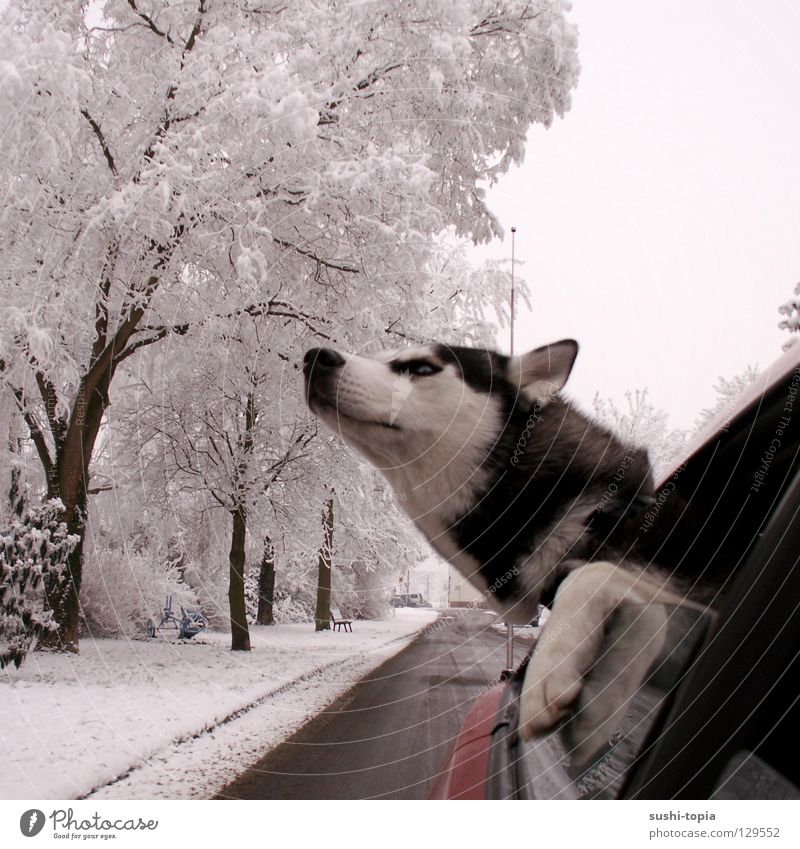 Sky White Tree Red Clouds Winter Black Forest Street Life Snow Window Freedom Dog Car Rain