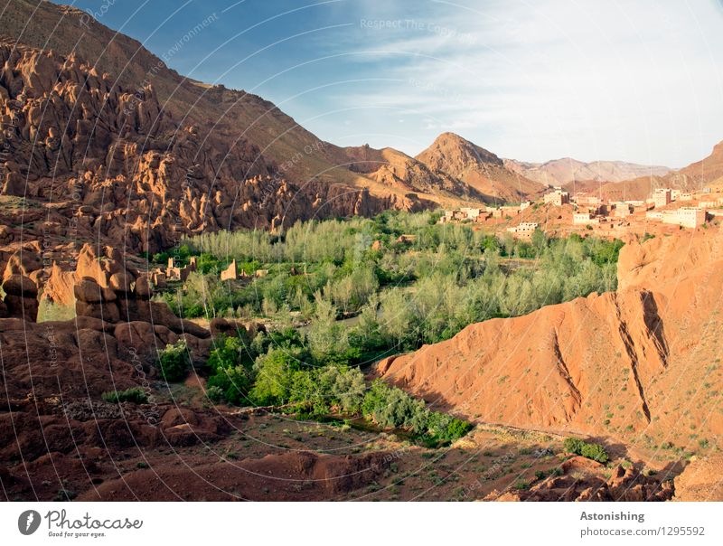 Green snake Environment Nature Landscape Plant Sand Sky Clouds Summer Weather Beautiful weather Tree Bushes Forest Hill Mountain Atlas Peak Oasis Morocco Town