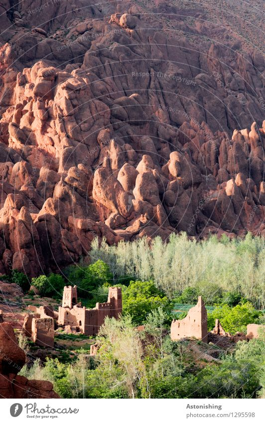 kasbah Environment Nature Landscape Plant Summer Weather Beautiful weather Tree Grass Forest Rock Mountain Atlas Oasis Morocco Small Town Wall (barrier)