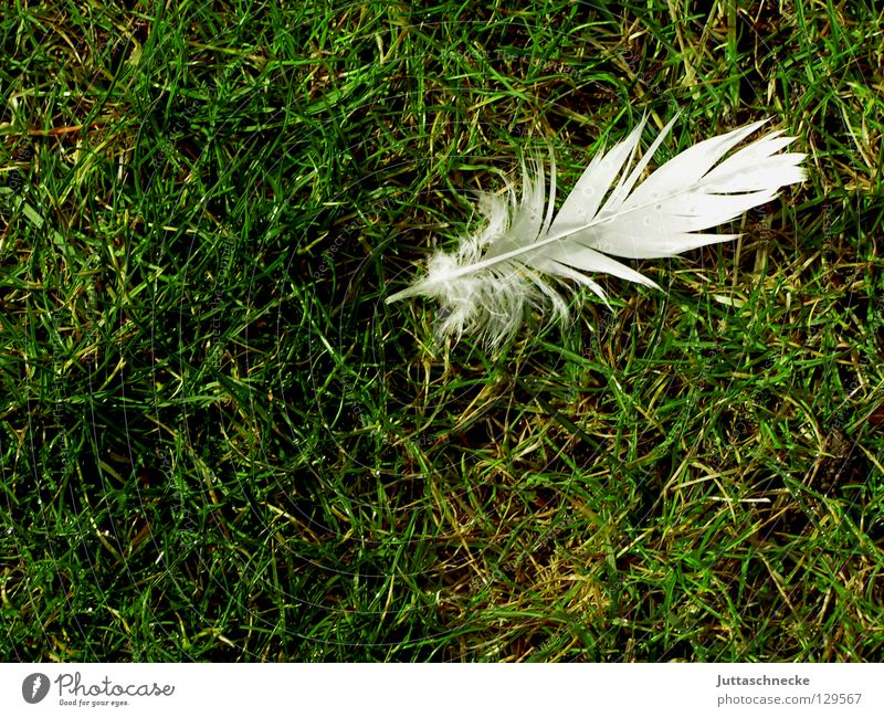 White Green Loneliness Meadow Grass Bird Flying Lawn Soft Peace Feather Easy Doomed Hover Pigeon Individual