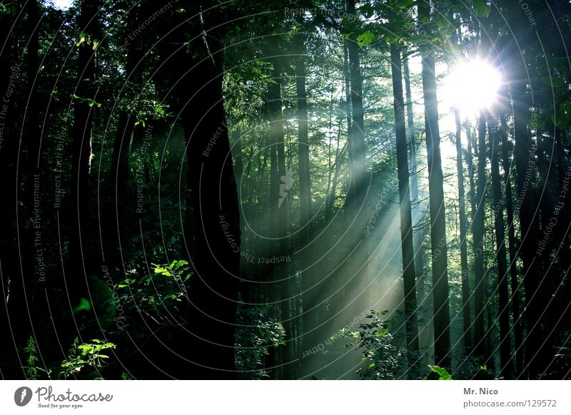 ray of hope Forest Light Shaft of light Lighting Radiation Sunbeam Strip of light Green Dark Reflection Tree Tree trunk Thin Stripe Leaf Deciduous forest