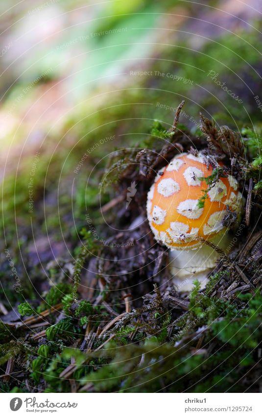 """Plopp"" Environment Nature Animal Earth Autumn Moss Mushroom Forest Mountain Fresh Green Orange White Colour photo Macro (Extreme close-up) Deserted Day"