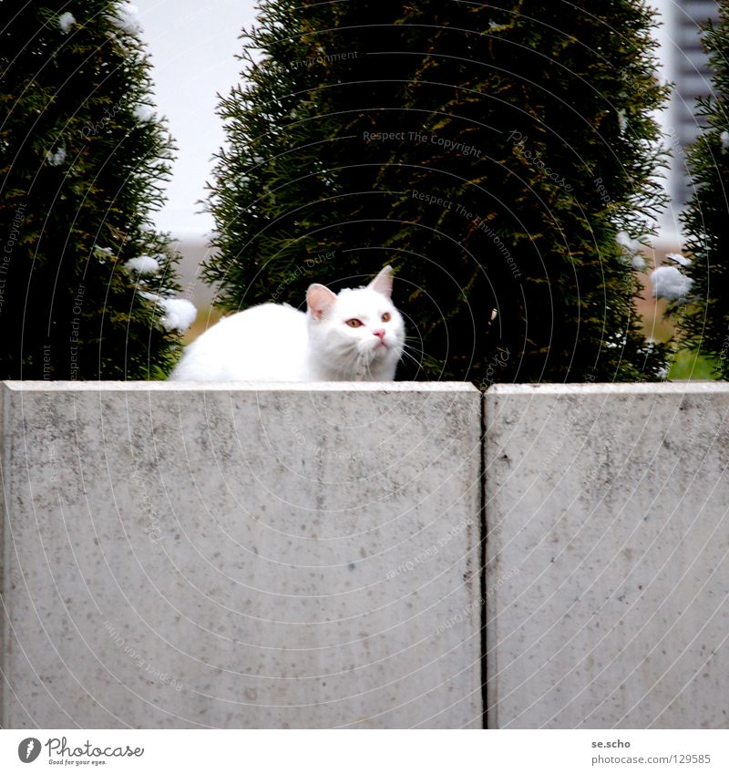 White Green Garden Wall (barrier) Cat Hunting Audience Mammal Hunter Hiding place Guard