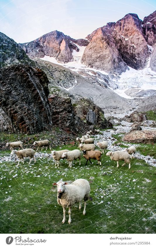 Picture taken: Pyrenees Hiking Trail 25 Vacation & Travel Tourism Trip Adventure Far-off places Freedom Mountain Environment Nature Landscape Plant Animal