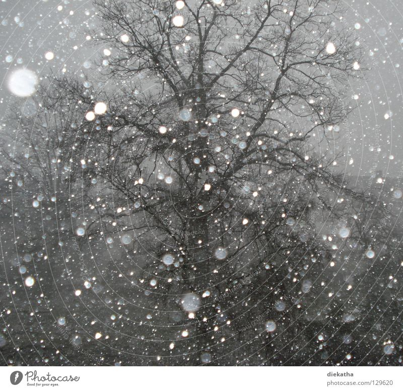 Spring fever? Tree Winter Cold Snowflake Gray Snowfall Seasons Calm Weather Ice dreariness