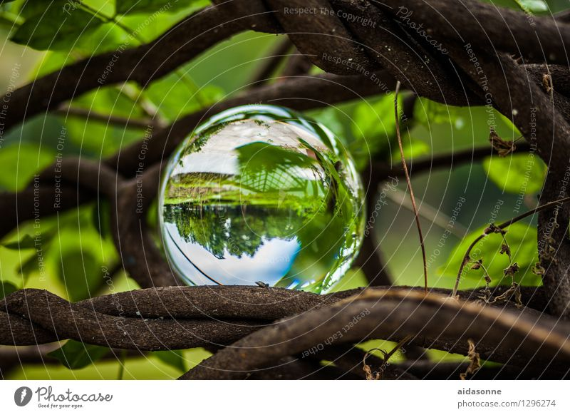 glass ball Nature Plant Summer Garden Park Forest Decoration Kitsch Odds and ends Glass ball Sphere Attentive Caution Serene Patient Calm Colour photo