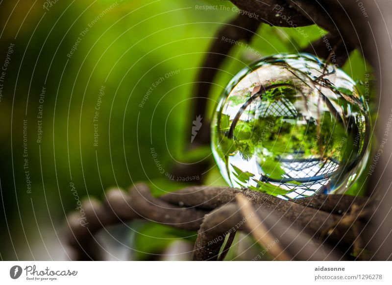 Nature Plant Summer Calm Forest Garden Park Kitsch Serene Attentive Odds and ends Glass ball
