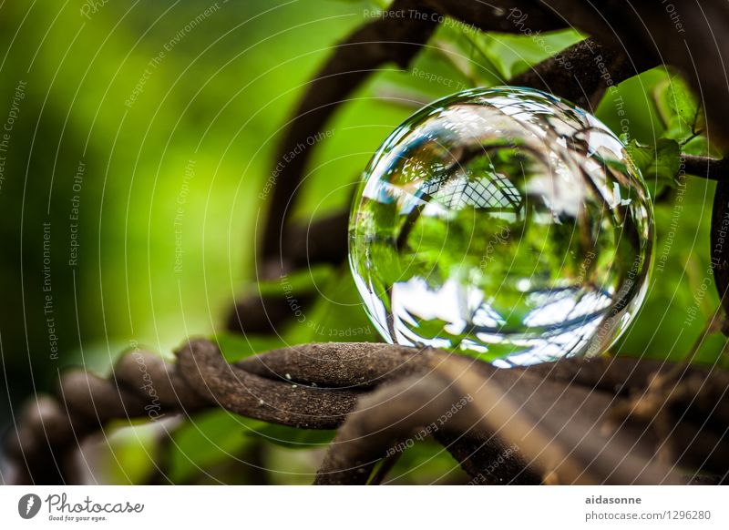 glass ball Nature Plant Garden Park Forest Decoration Kitsch Odds and ends Glass ball Attentive Watchfulness Caution Serene Patient Calm Colour photo
