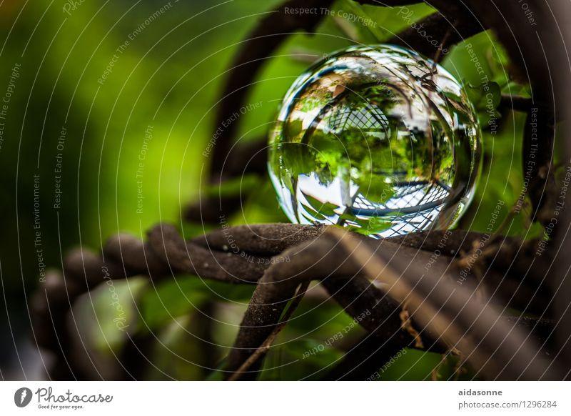 Plant Summer Calm Garden Park Decoration Glass Serene Foliage plant Glass ball