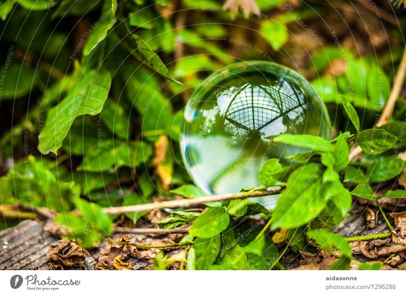 glass ball Nature Plant Summer Garden Park Forest Glass ball Attentive Caution Serene Calm Colour photo Exterior shot Deserted Day