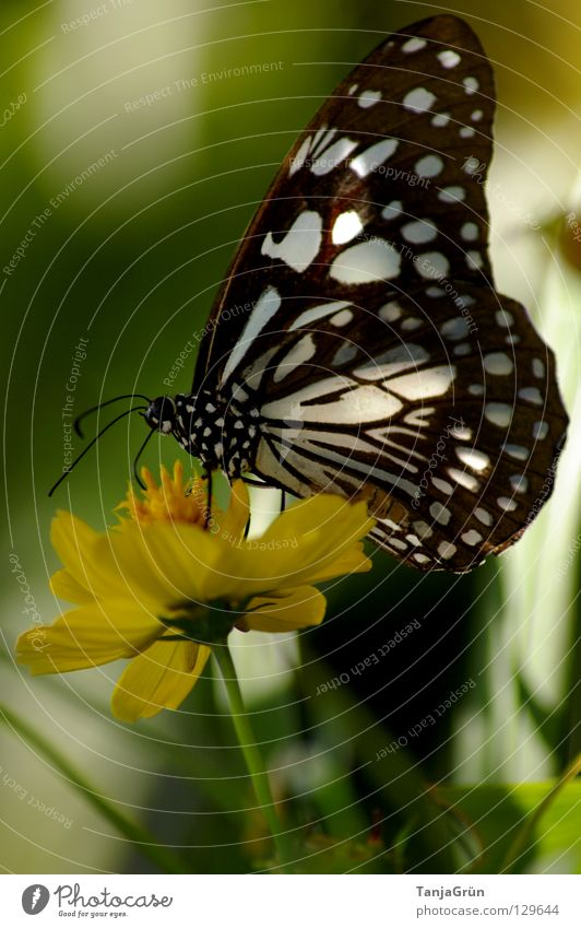 Nature White Flower Green Plant Summer Black Nutrition Yellow Blossom Warmth Bright Flying Break Wing Insect