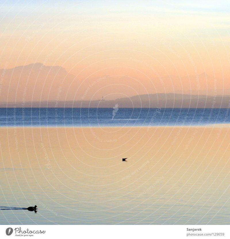 Sky Blue Sun Summer Ocean Joy Clouds Calm Mountain Lake Bird Contentment Waves Pink Swimming & Bathing Kitsch