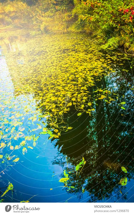 Nature Plant Water Landscape Leaf Forest Yellow Autumn Background picture Garden Lake Park Design Weather Hiking Beautiful weather
