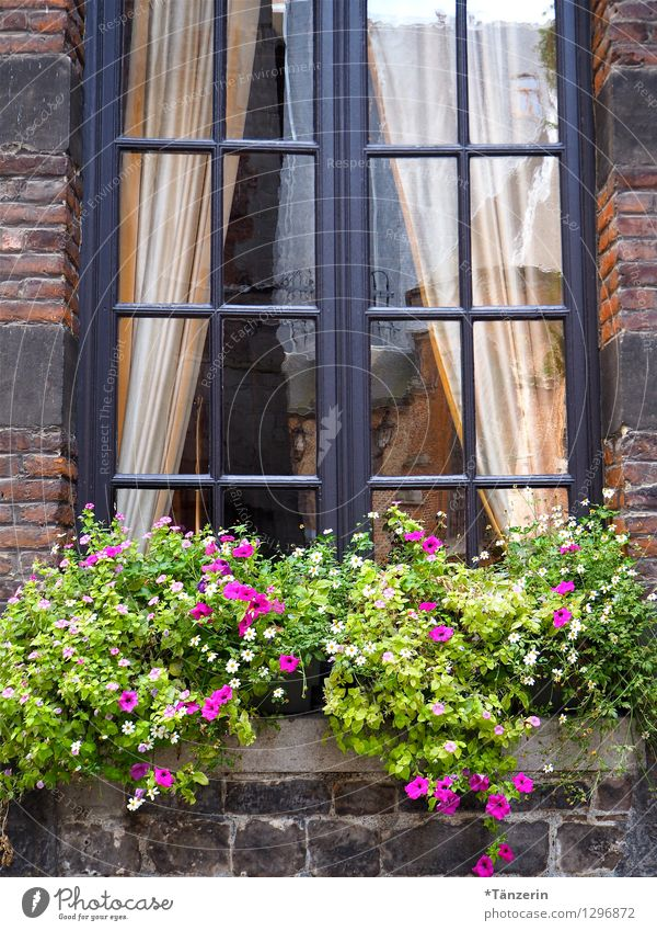 Nature Plant Summer House (Residential Structure) Window Warmth Natural Building Happy Contentment Tourism Decoration Fresh Happiness Beautiful weather Romance