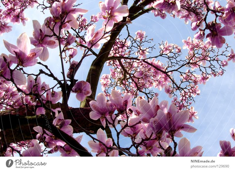 Nature Beautiful White Joy Blossom Spring Happy Park Warmth Moody Lighting Pink Force Perspective Happiness Climate