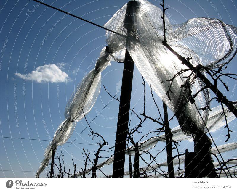 networked trees Tree Apple tree Plantation Clouds Rod Wire White Apple plantation Back-light tree nets hail nets Sky Blue Branch Net Sun