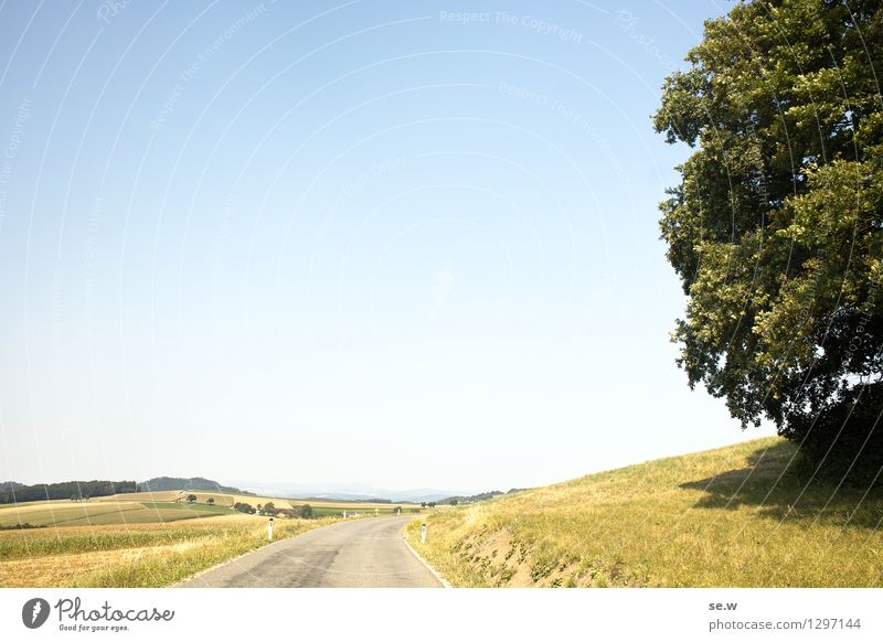 the tree Environment Cloudless sky Sun Summer Beautiful weather Tree Field Hill Traffic infrastructure Street Blue Yellow Green Bright Colours Colour photo