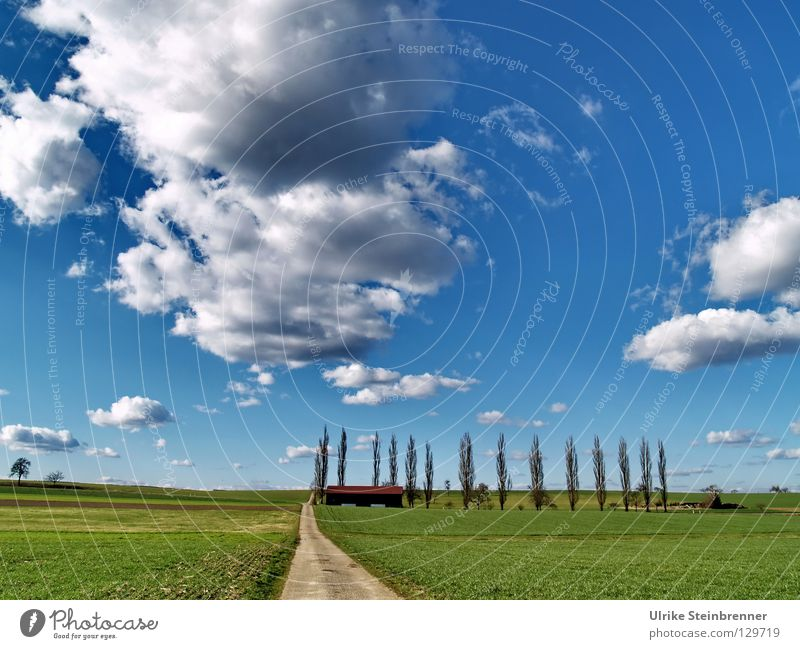 Nature Sky White Tree Green Blue Clouds Grass Spring Landscape Line Field Hiking Going Weather Fresh
