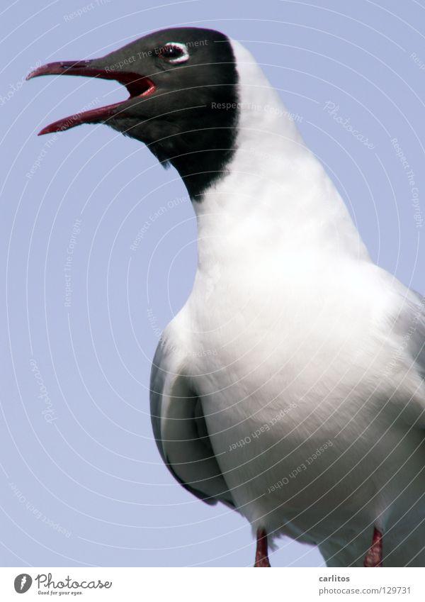 Ocean Beach Bird Coast Seagull Animal Squaller