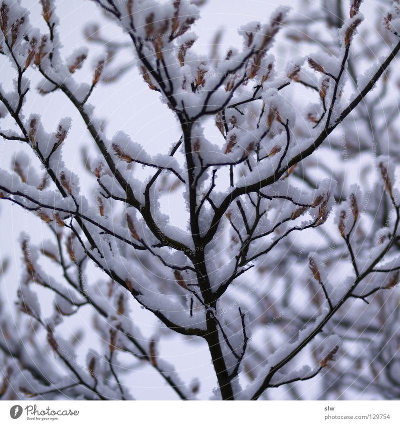 Winter Tree Gray Loneliness Ice Branch Black & white photo Snow