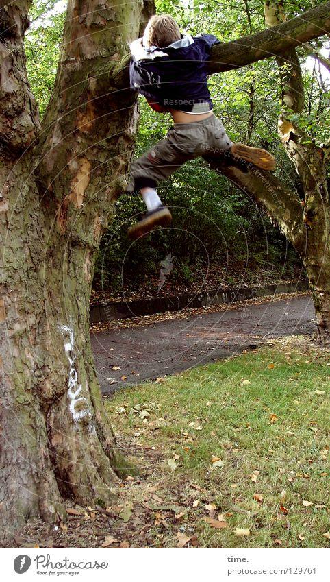 Child Tree Boy (child) Garden Park Work and employment Branch Climbing Effort Completed Perspire Extreme sports Garden path