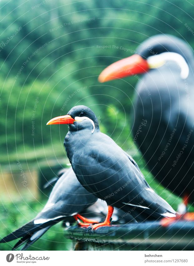 from the dance series Nature Animal Garden Park Meadow Wild animal Bird Animal face Wing Incase Tern Feather Beak Observe Relaxation Sit Exceptional Elegant