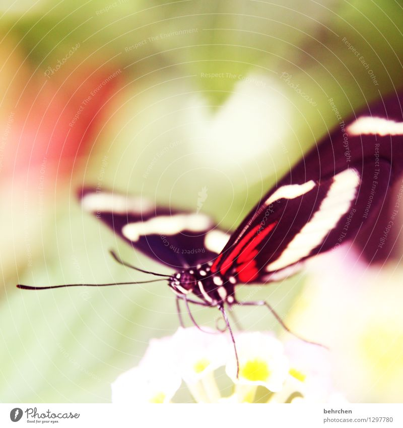 There's a heart for you. Nature Plant Animal Spring Summer Beautiful weather Flower Leaf Blossom Garden Park Meadow Wild animal Butterfly Animal face Wing 1