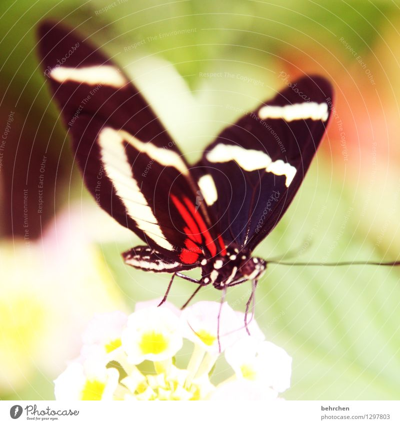 2016...not without my butterflies;) Nature Plant Animal Spring Summer Beautiful weather Flower Leaf Blossom Garden Park Meadow Wild animal Butterfly Animal face