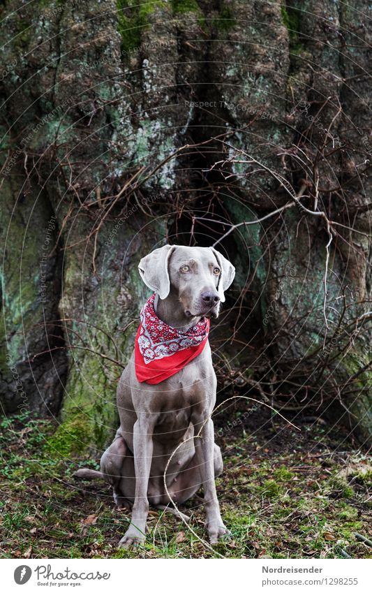 Dog Tree Animal Hiking Sit Esthetic Uniqueness Friendliness Curiosity Protection Safety Tree trunk Trust Concentrate Watchfulness Pet