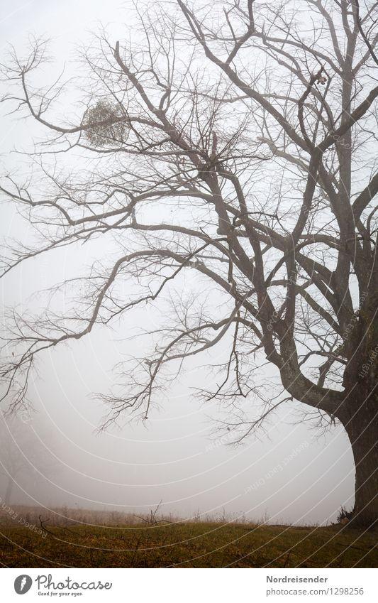 Nature Old Plant Tree Landscape Dark Senior citizen Autumn Moody Park Rain Fog Power Large Climate Change