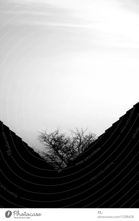 V Environment Nature Sky Tree House (Residential Structure) Roof Growth Dark Town Black & white photo Exterior shot Abstract Deserted Day