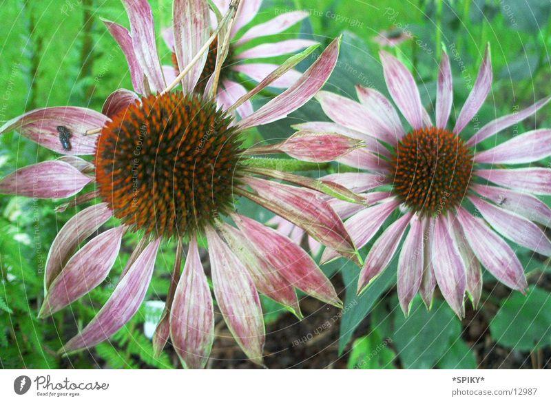 Nature Flower Violet