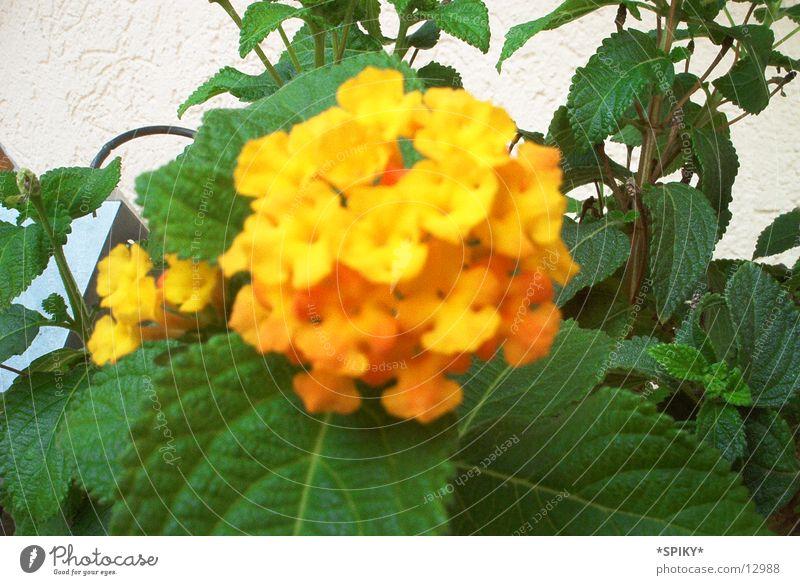 little flowers Flower Nature
