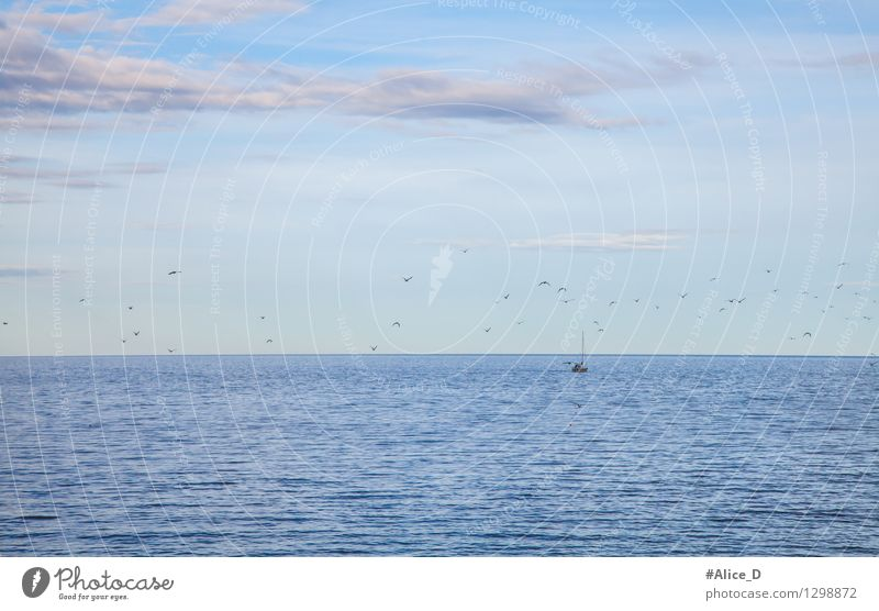 Fishing boat returns from fang Seagull Gull birds Flock Maritime Blue Homesickness Expectation Nature Environment Ocean Sky blue Sea water Fisherman Bird