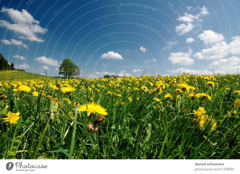 summer meadow Meadow Summer Spring Beautiful weather Leisure and hobbies Tree Vacation & Travel Dandelion Flower Blossom Grass Break Green Lunch hour