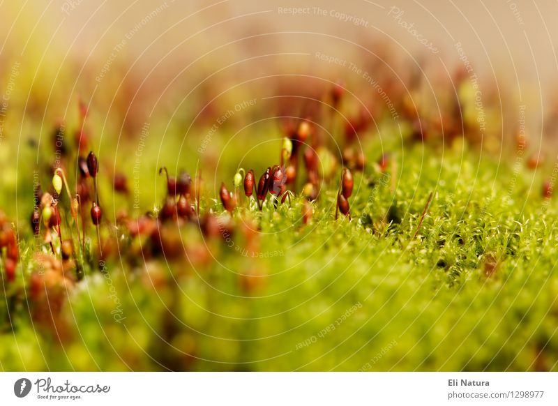moss landscape Nature Landscape Plant Earth Spring Summer Beautiful weather Moss Garden Park Meadow Blossoming Relaxation Growth Esthetic Wet Natural Brown